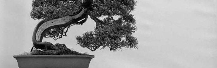 Bonsai Triennale Wrocław 2016 – Galeria drzew